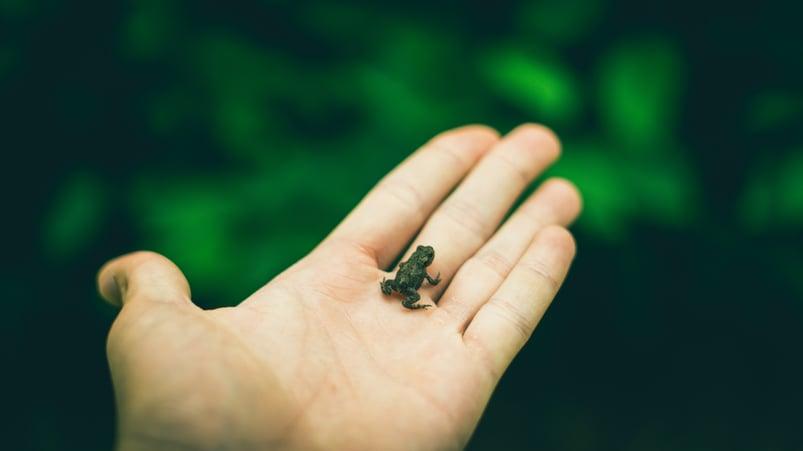 frog in hand.jpg